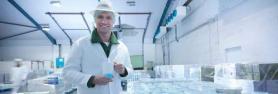 T8 G13 UV-C sijalke za sterilizacijo