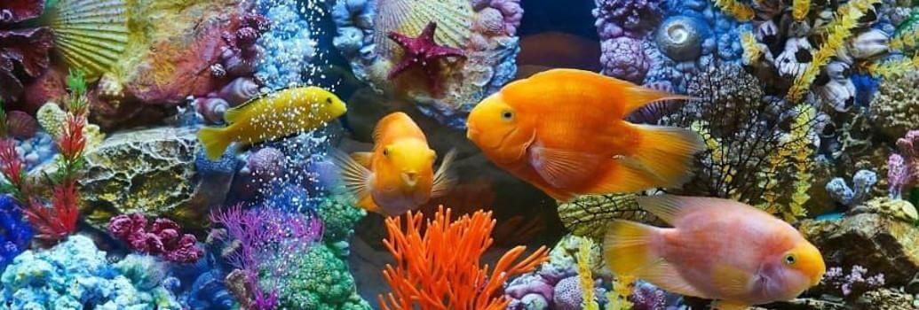 Aquastar-Lampen für Aquarien