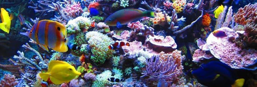Marinestar-Lampen für Meerwasseraquarien