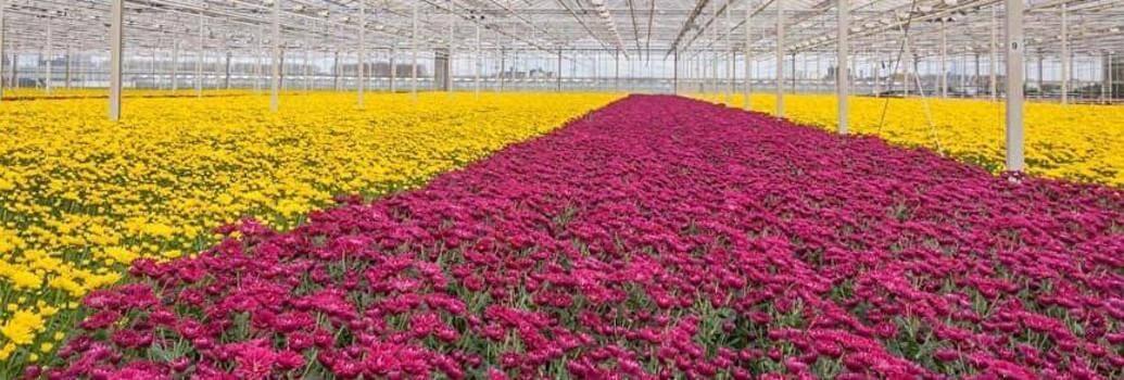 Sijalka in komponente za profesionalno gojenje rastlin